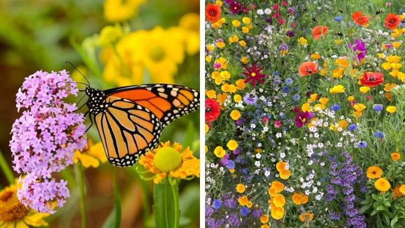 Haantje Hoveniers | Duurzaamheid | Duurzame tuin